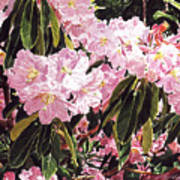 Rhodo Grove Art Print by David Lloyd Glover
