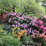 Rhododendron Hill Art Print