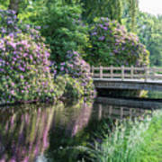 Rhododendrons And Wooden Bridge In Park Art Print