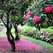Rhododendrons Blooming Villa Carlotta Italy Art Print
