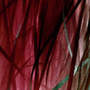 Ribbon And Lace Art Print