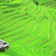 Rice Field Terraces Art Print