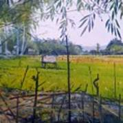 Rice Fields At Bumi Agung Lampung Sumatra Indonesia 2008  Art Print