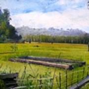 Rice Fields At Laaiy Krui Lampung Sumatra Indonesia 2008  Art Print
