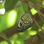 Rice Paper Butterfly Clinging To A Tree Branch Art Print
