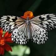 Rice Paper Butterfly Art Print