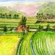 Ricefield Panorama Art Print
