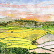 Ricefield Terrace Art Print