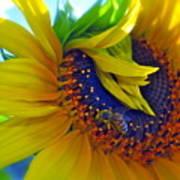 Rich In Pollen Art Print