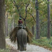 Riding An Elephant Art Print