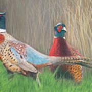 Ring-necked Pheasants Art Print