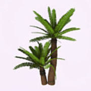 River Cycad Plants Art Print
