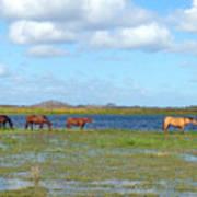 River Horses Horizon Art Print