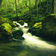 River In A Green Forest Art Print