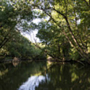 River In The Jungle. Art Print