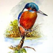 River Kingfisher Art Print