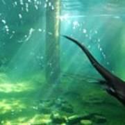 River Otter Swim Art Print