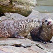 River Otters Art Print