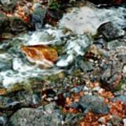 River Rock Leaves Art Print