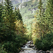 River Stream In Mountain Forest Art Print