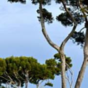 Riviera Trees Art Print