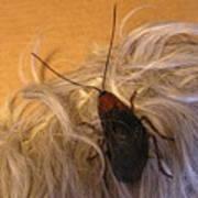 Roach Hair Clip Art Print