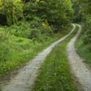 Road In Woods 1 D Art Print