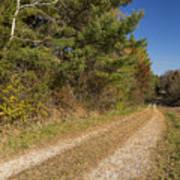 Road In Woods Autumn 6 Art Print