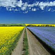 Road Through Flowering Flax And Canola Art Print
