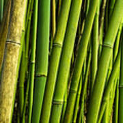 Road To Hana Bamboo Panorama - Maui Hawaii Art Print