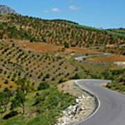Road Winding Between Fields Of Olive Trees Art Print