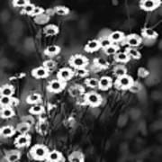 Roadside Wildflowers Art Print