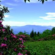 Roan Mountain Rhododendron Gardens Art Print
