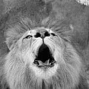 Roar  Black And White Art Print
