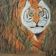 Roaring Tiger James Art Print