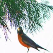 Robin 2 Art Print