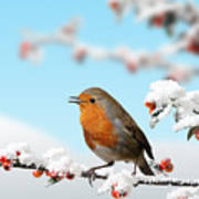 Robin And Cotoneaster With Snow Art Print