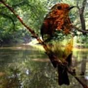 Robin By The River Art Print