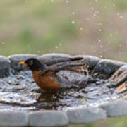 Robin In Bird Bath New Jersey  Art Print