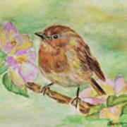 Robin In Flowers Art Print