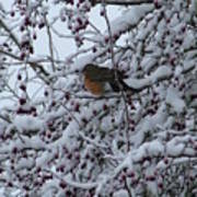 Robin In Snow Art Print