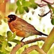 Robin In Tree Art Print