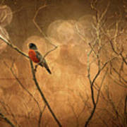Robin Print by Lois Bryan