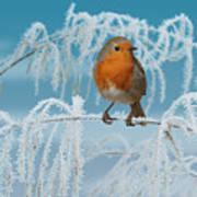 Robin On Frosty Grass Art Print
