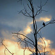 Robin Watching Sunset After The Storm Art Print