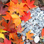 Rock Garden Autumn Leaves Art Print