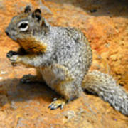 Rock Squirrel Art Print