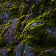 Rock With Green  Print by Barbara Schultheis