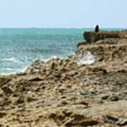 Rocky Limestone Cliff Blowing Rocks Preserve Jupiter Island Florida Art Print