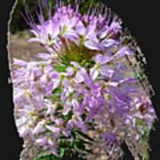 Rocky Mountain Bee Flower Art Print